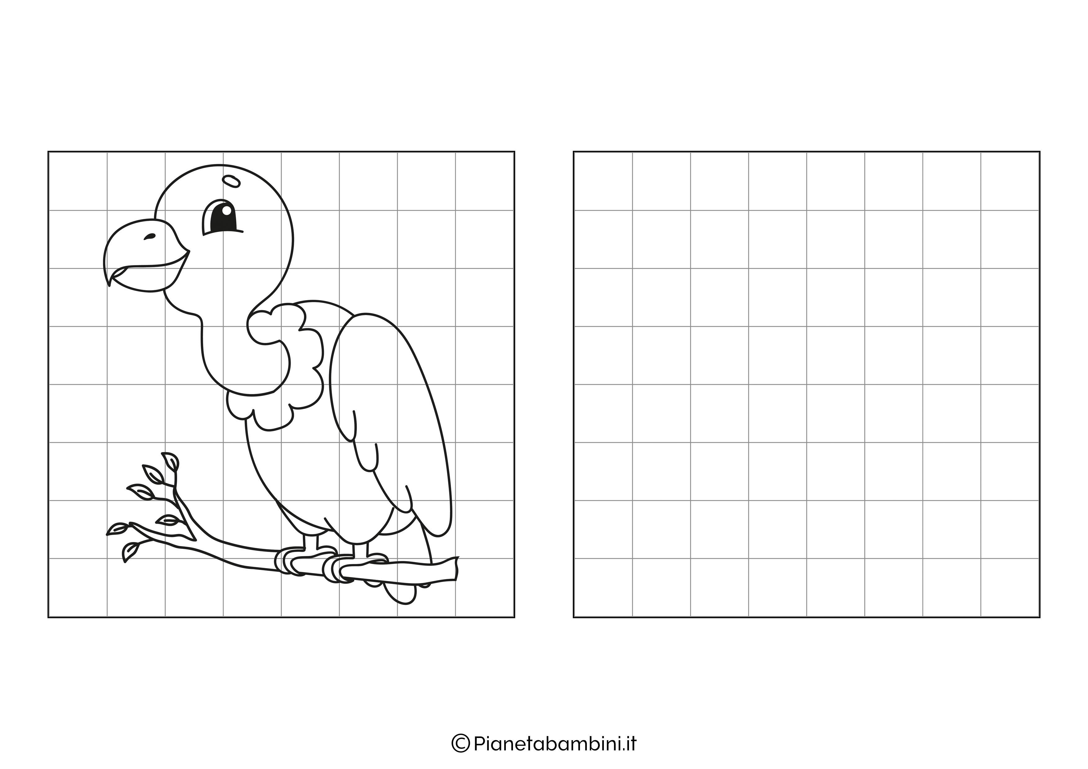 Avvoltoio da copiare