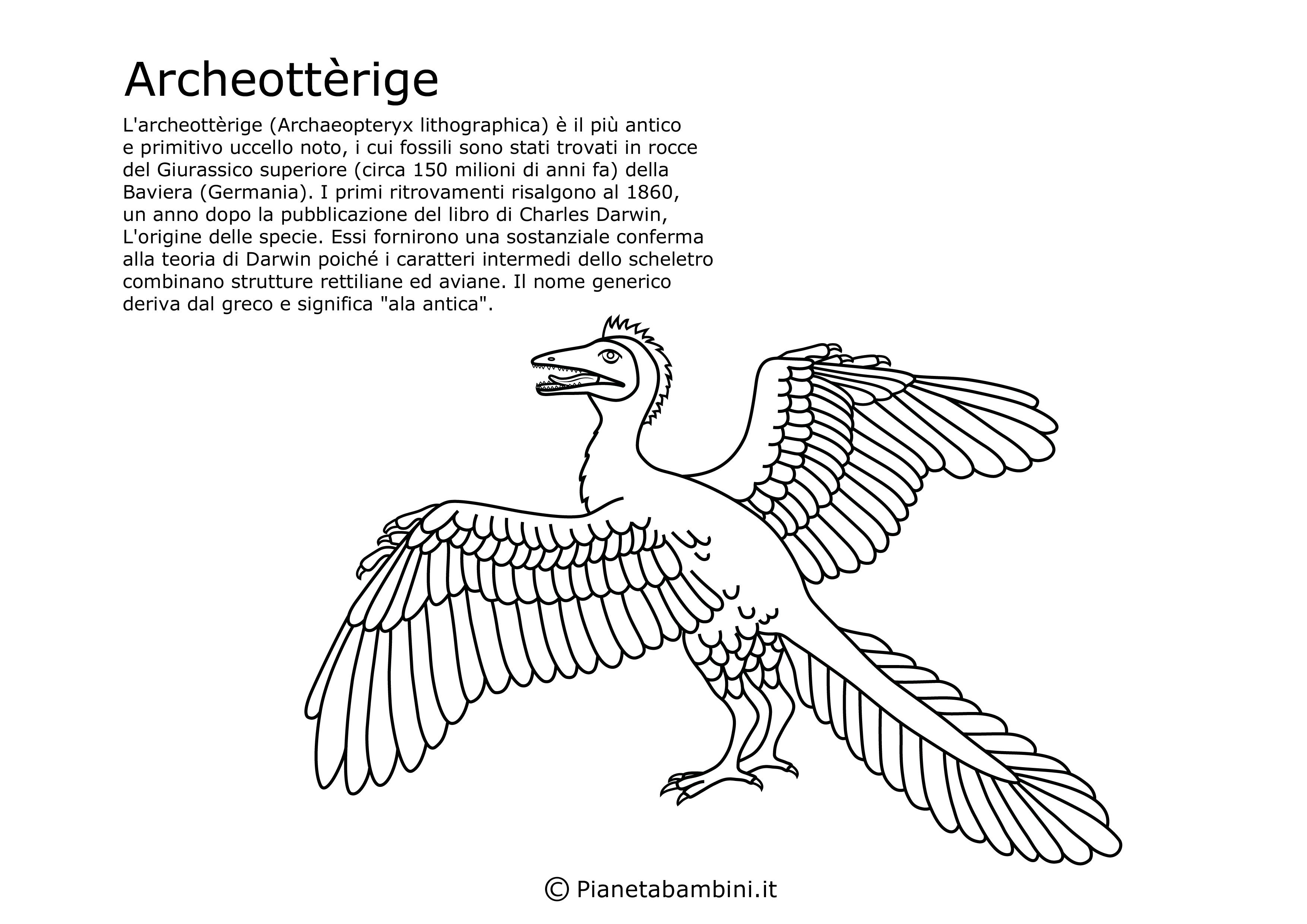 Archeottèrige