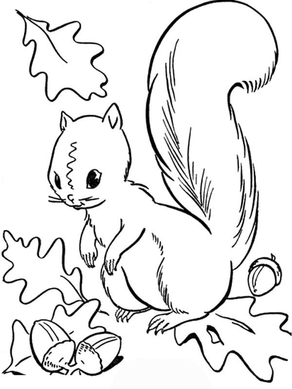 disegni sull 39 autunno da stampare e colorare