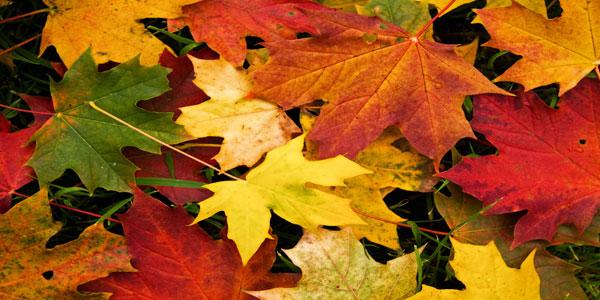 Disegni da stampare e colorare sull'autunno