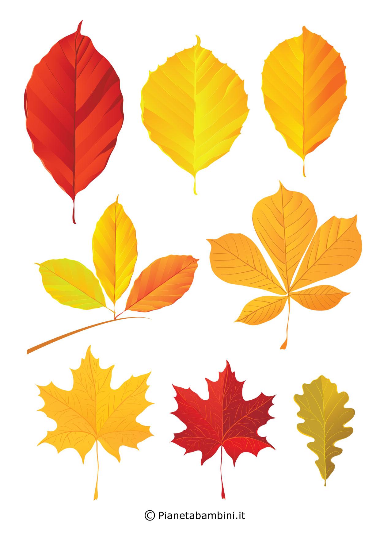 Frutta e foglie autunnali da ritagliare per lavoretti - Modello di foglia per bambini ...