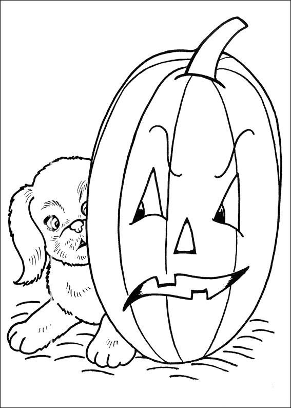 Un cane ed una zucca