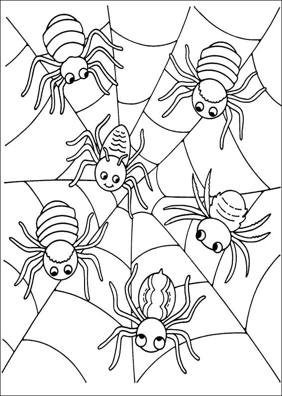 Ragni sulla ragnatela