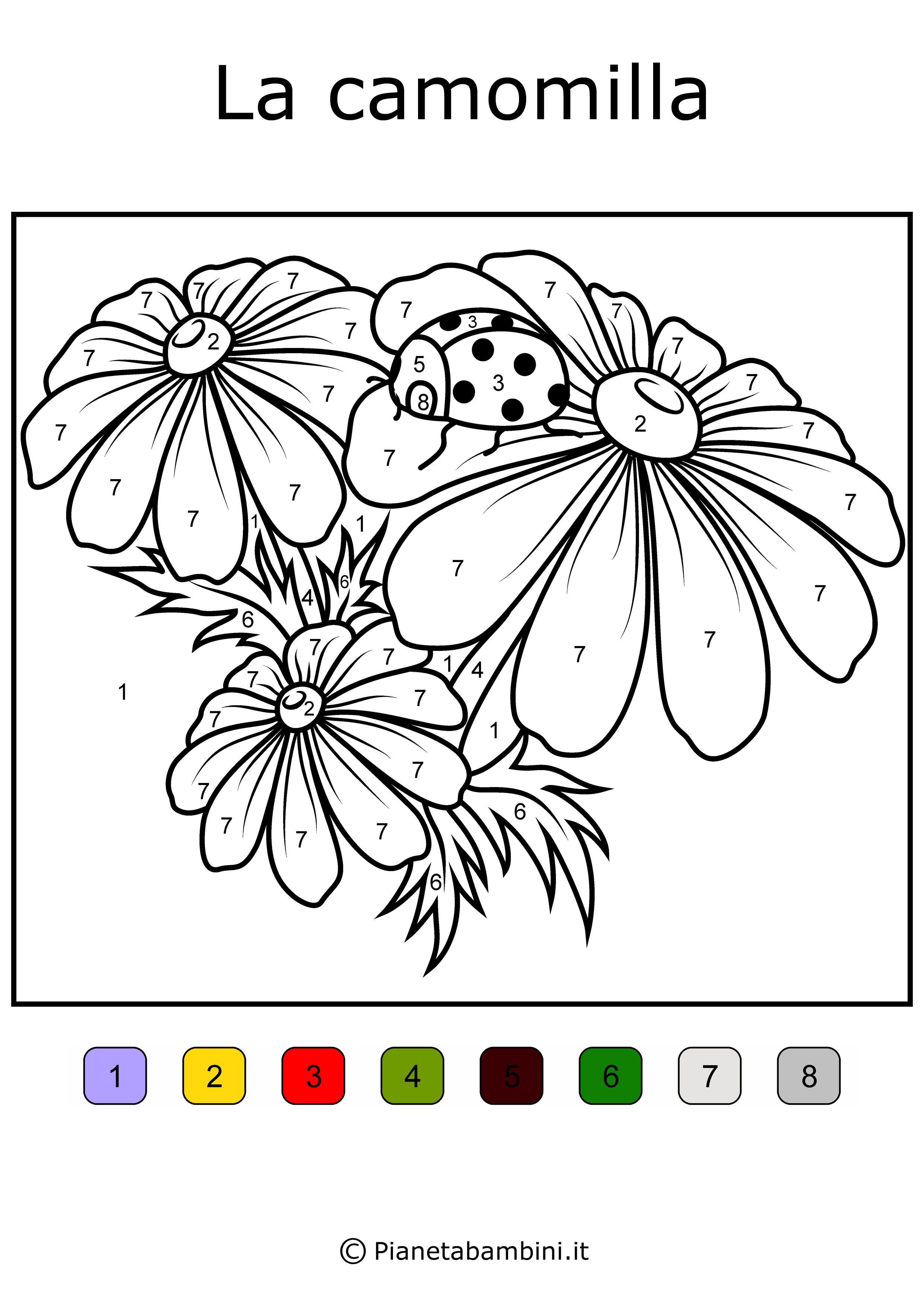 Conta-e-Colora-Semplice-Camomilla