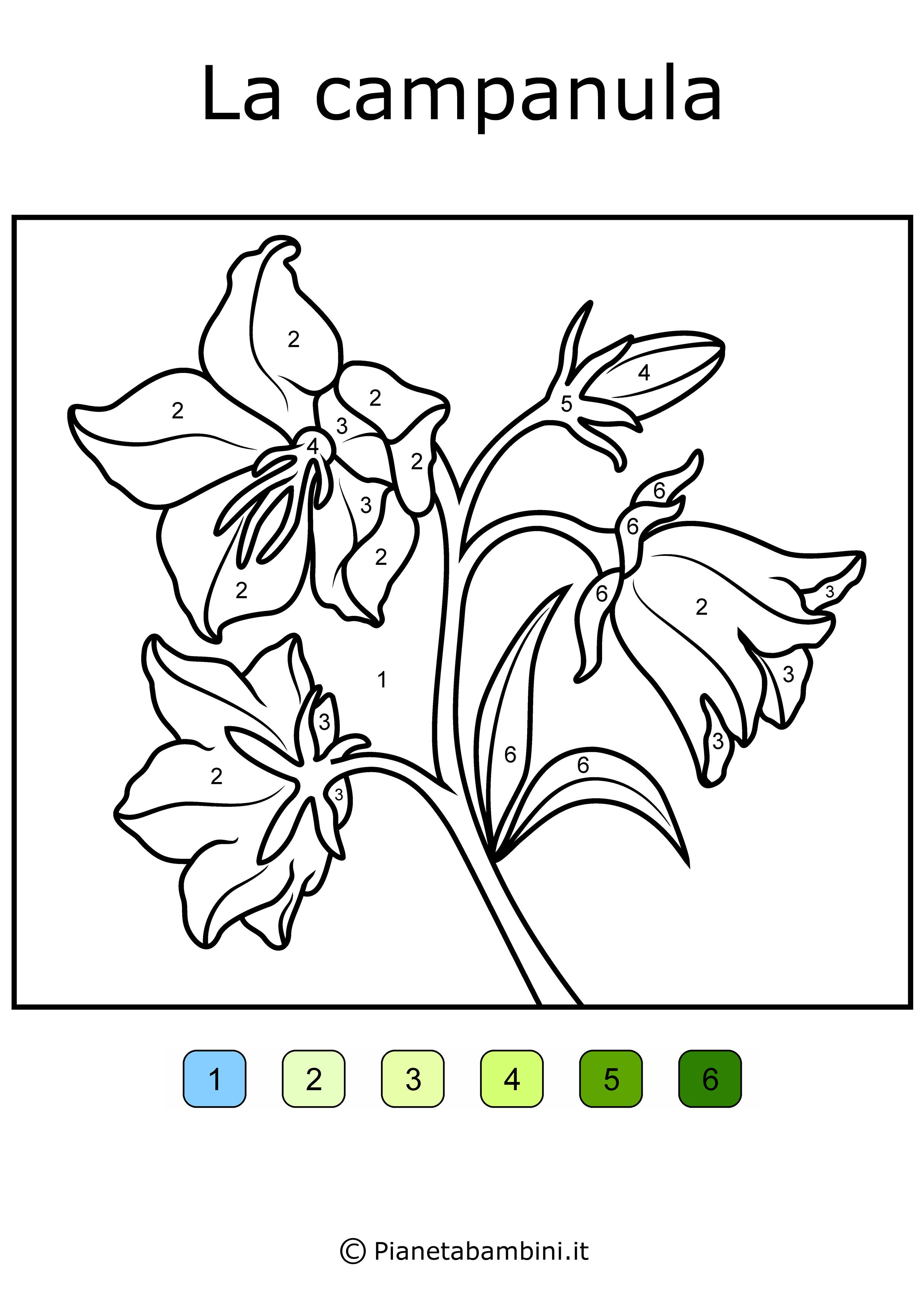 Conta-e-Colora-Semplice-Campanula