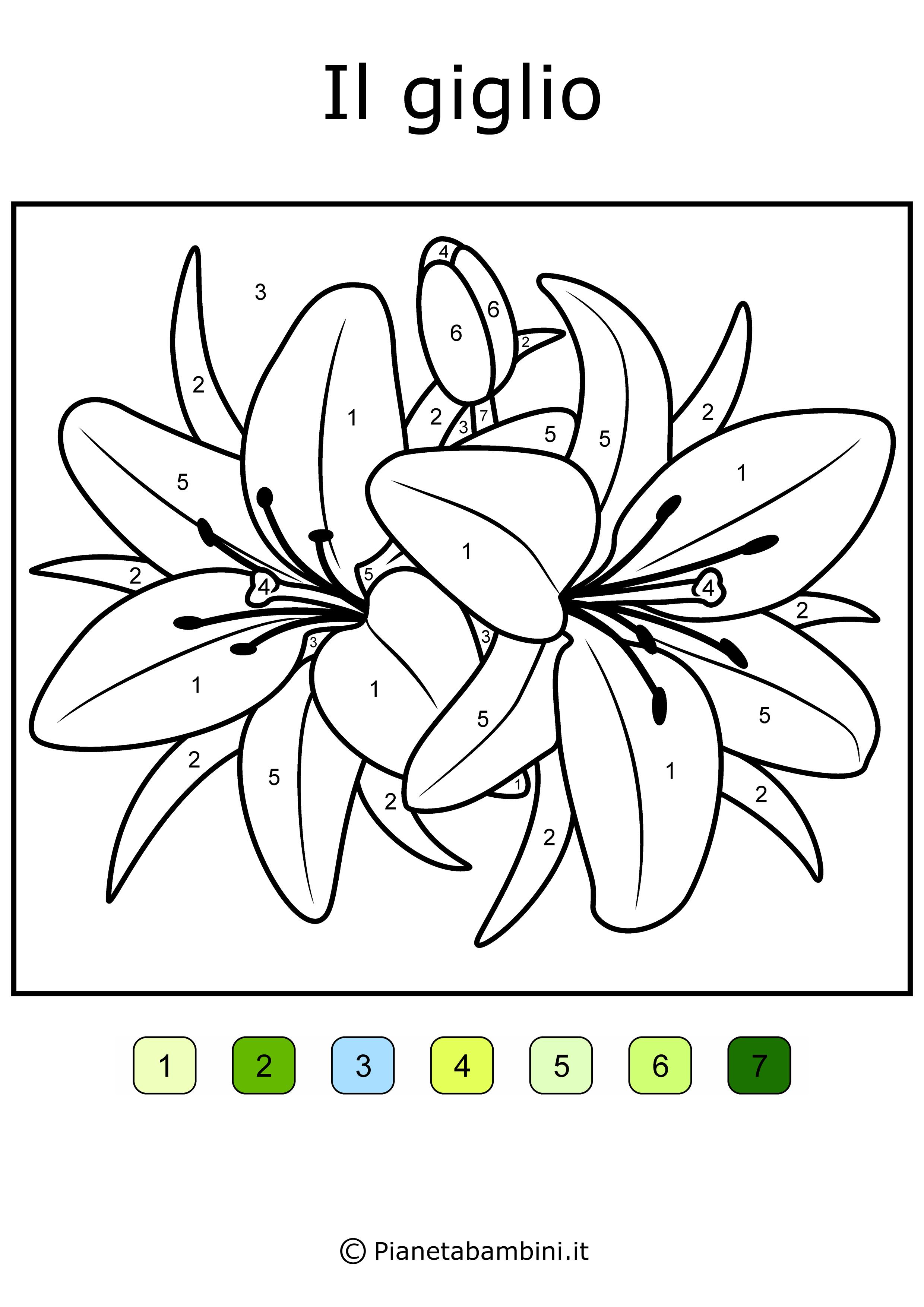 Conta-e-Colora-Semplice-Giglio