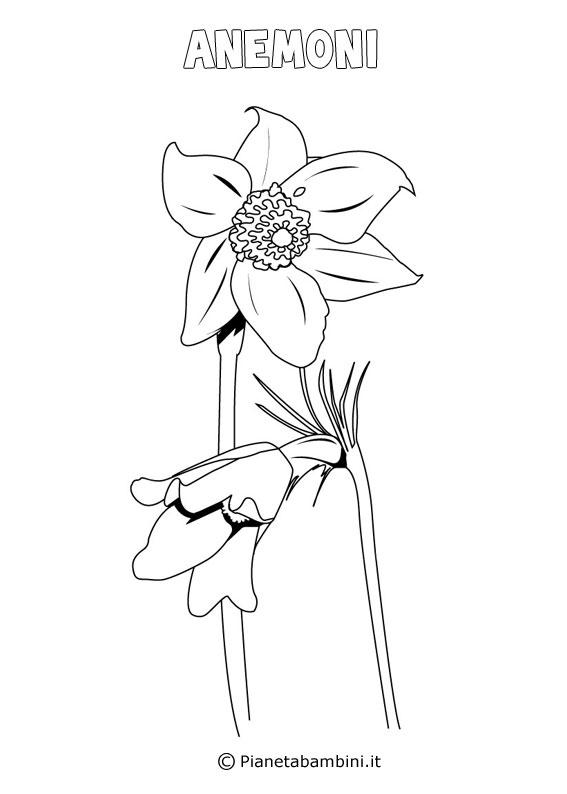 Fiore anemoni da colorare