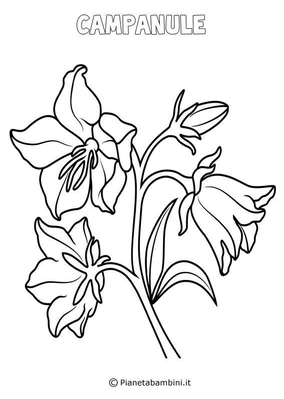Fiore campanule da colorare
