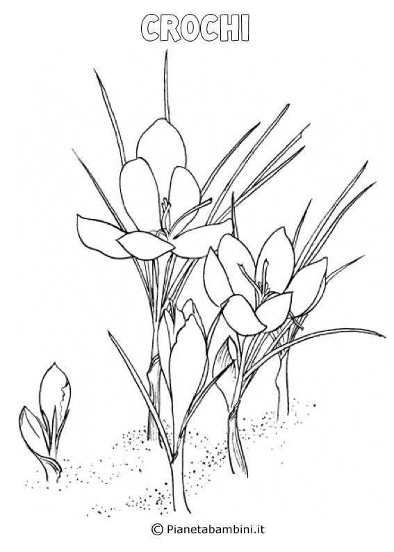 Fiore croco da colorare