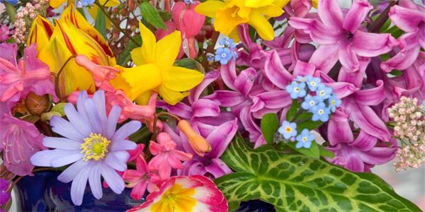 Disegni di fiori di primavera da colorare per bambini