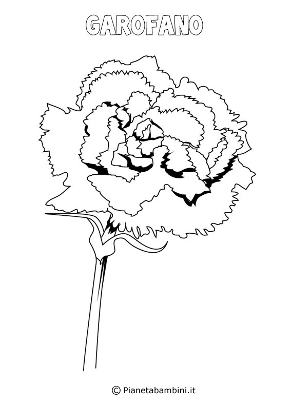 Fiore garofano da colorare