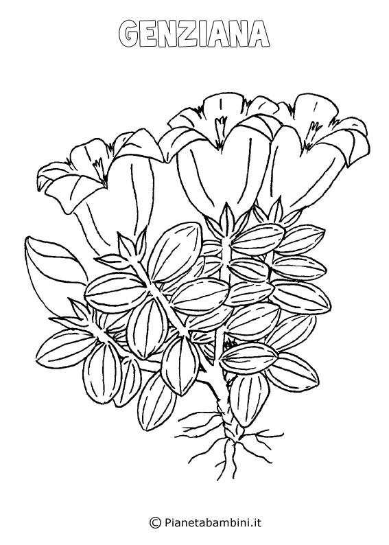 Fiore genziana da colorare