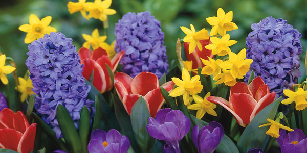 Foto di fiori di primavera con nomi