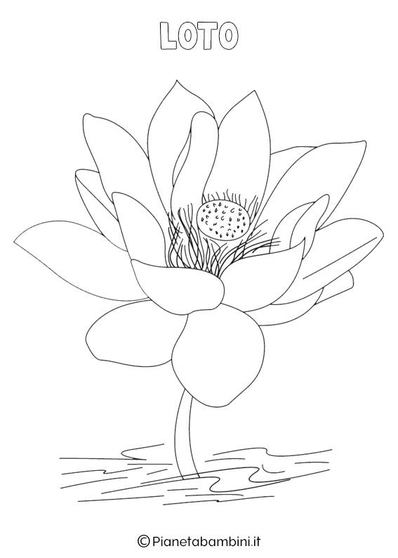 Fiore loto da colorare