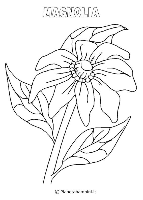Fiore magnolia da colorare