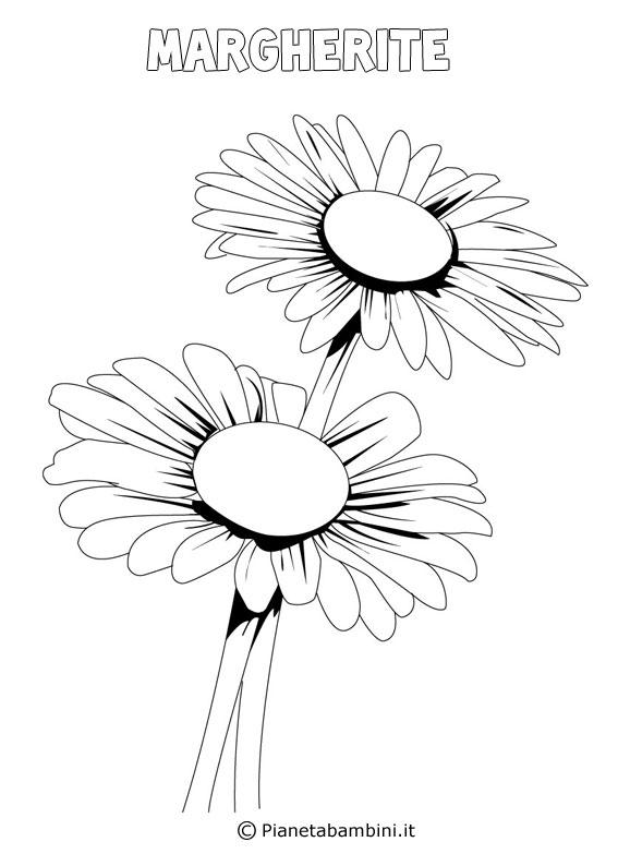Fiore margherita da colorare