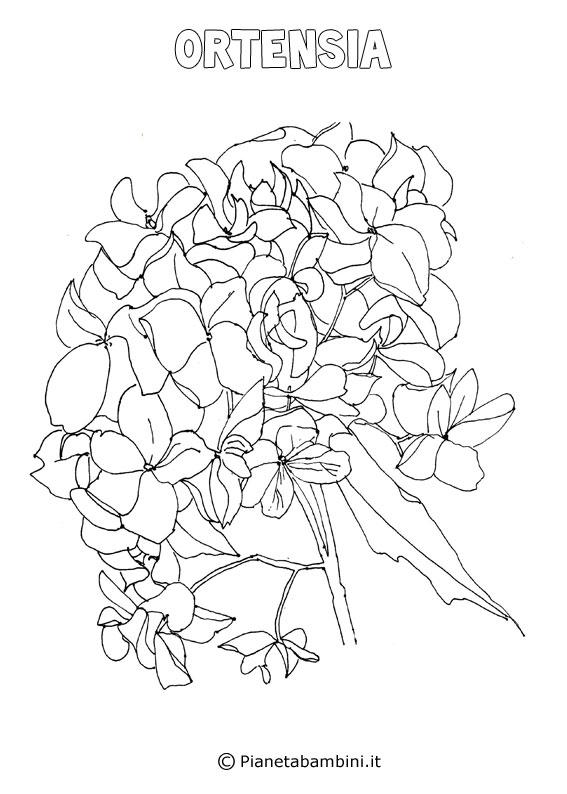 Fiore ortensia da colorare