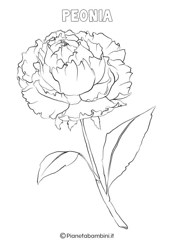 Fiore peonia da colorare