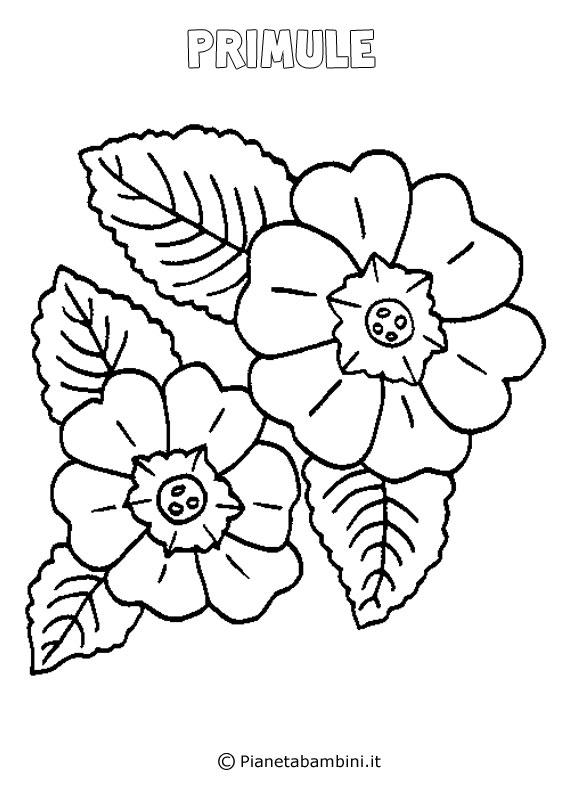Fiore primula da colorare
