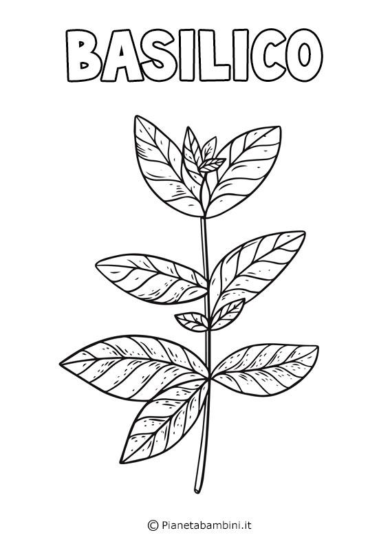 Basilico da colorare