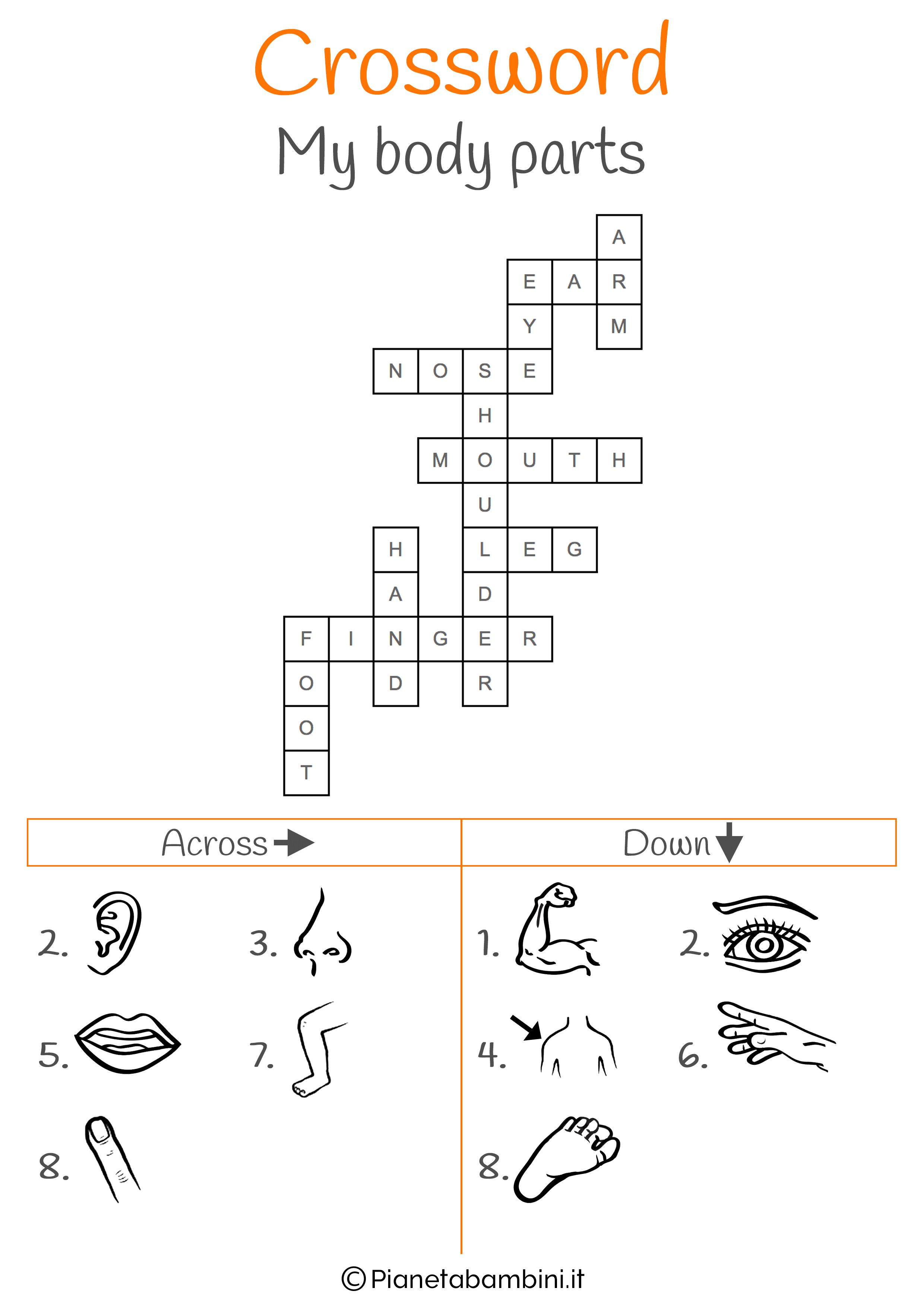 Soluzioni al cruciverba in inglese sulle parti del corpo