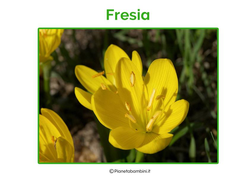 Fresia
