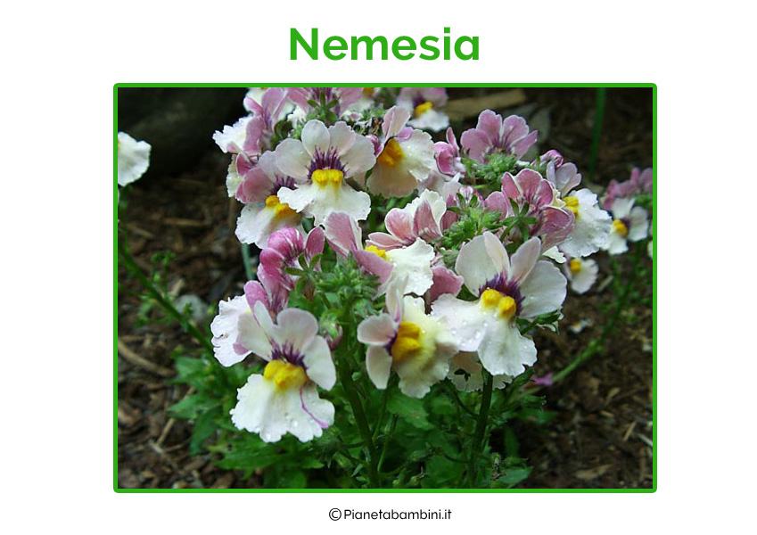 Nemesia