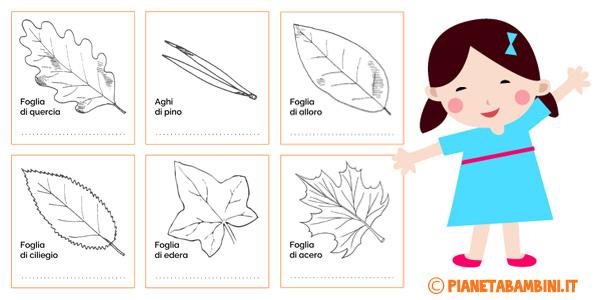 Schede didattiche sulla classificazione delle foglie