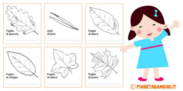 Classificazione-Foglie-Schede-Didattiche