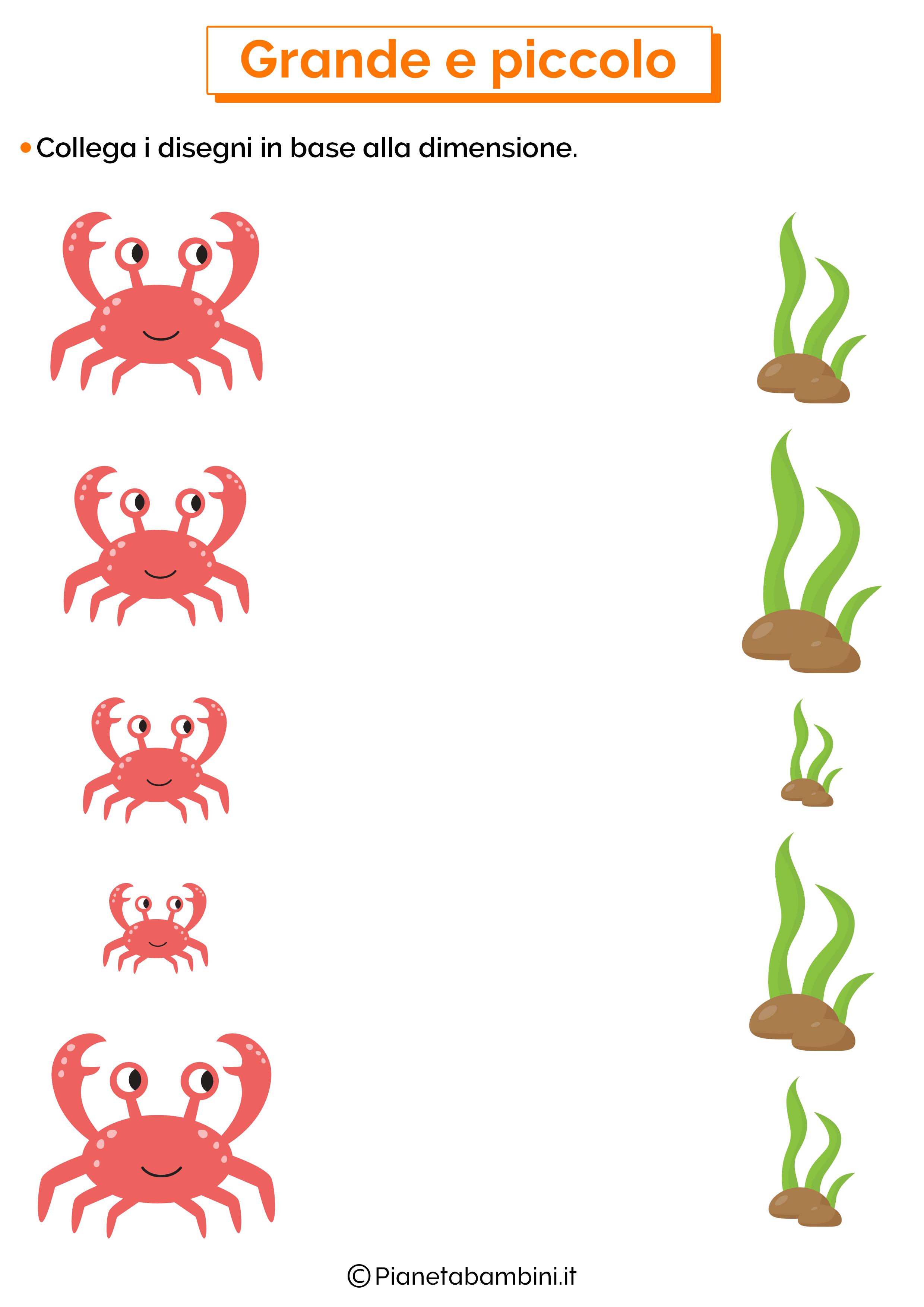 Scheda collega grande e piccolo 4