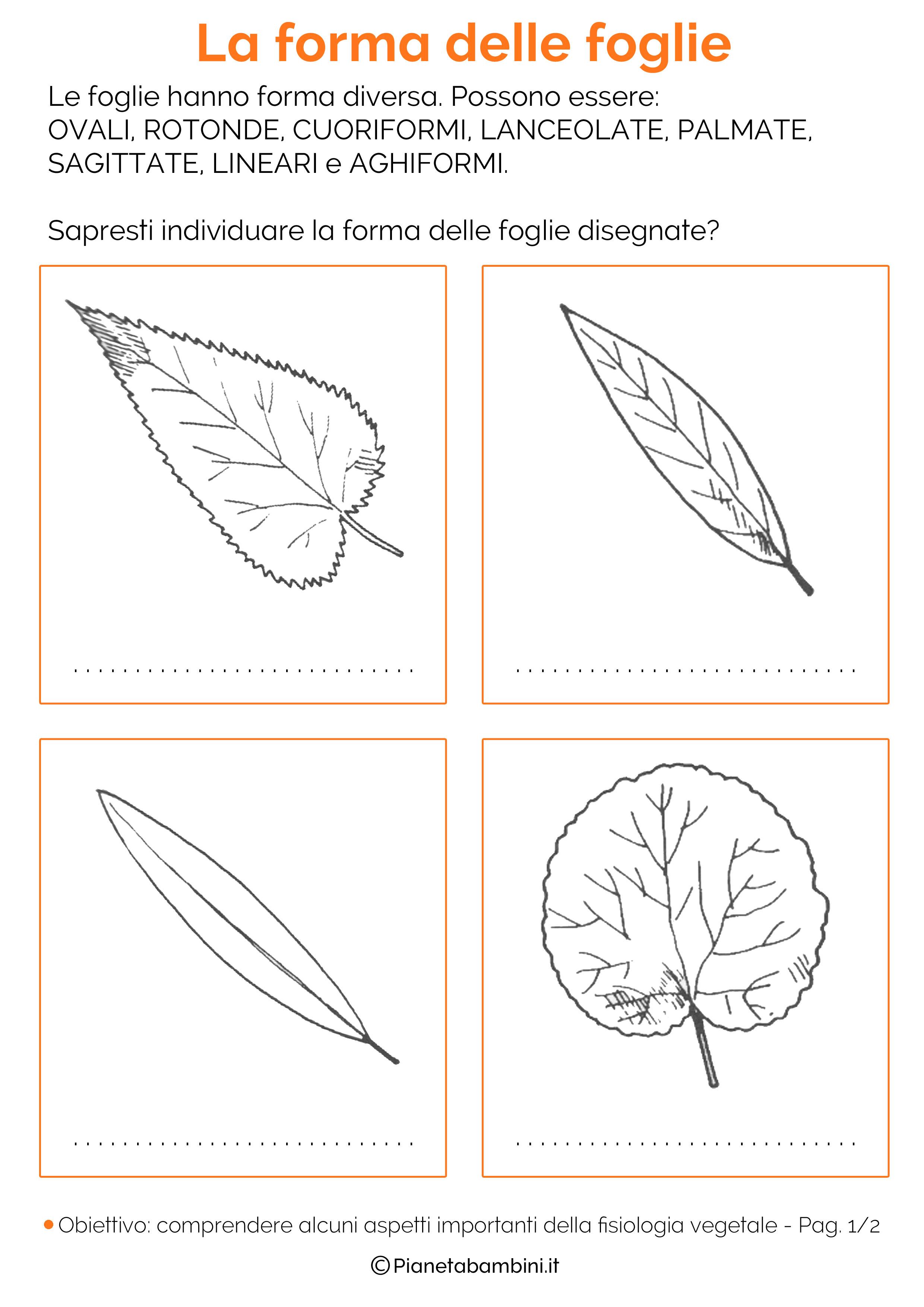 Forma-Foglie-Schede-Didattiche-1