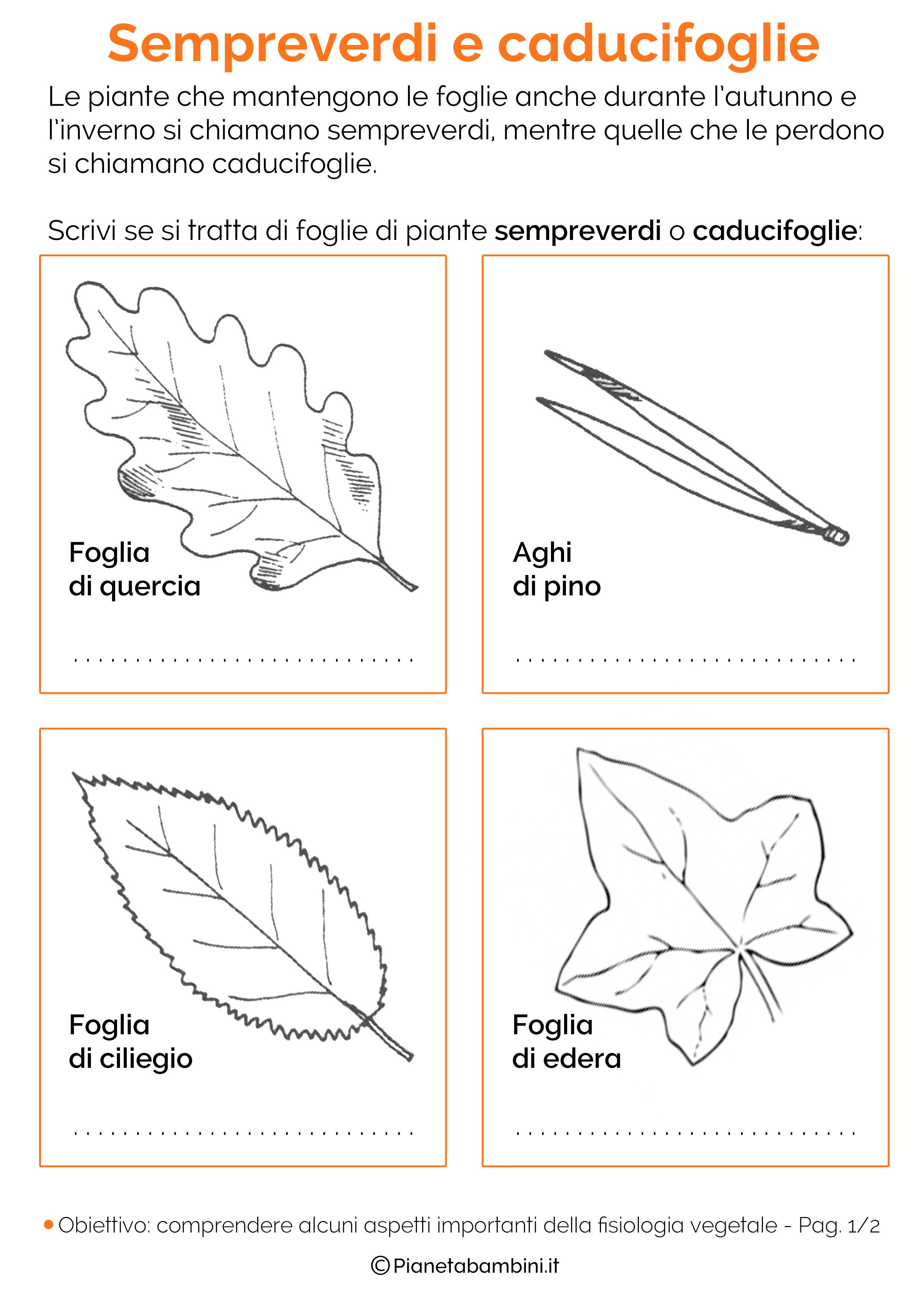 Tipi Di Piante Sempreverdi scienze – pianetabambini.it