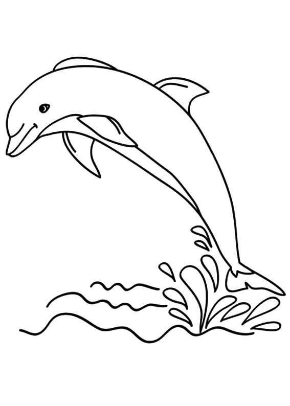30 Disegni Di Delfini Da Colorare Pianetabambiniit