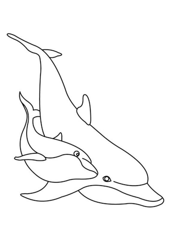 Delfini-05