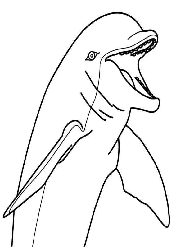 Delfini-20
