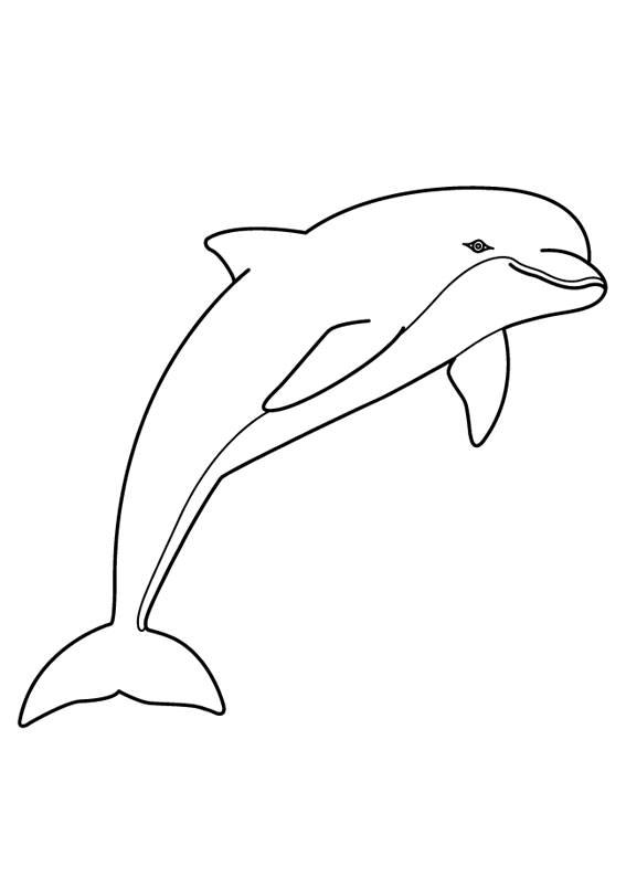 Delfini-24