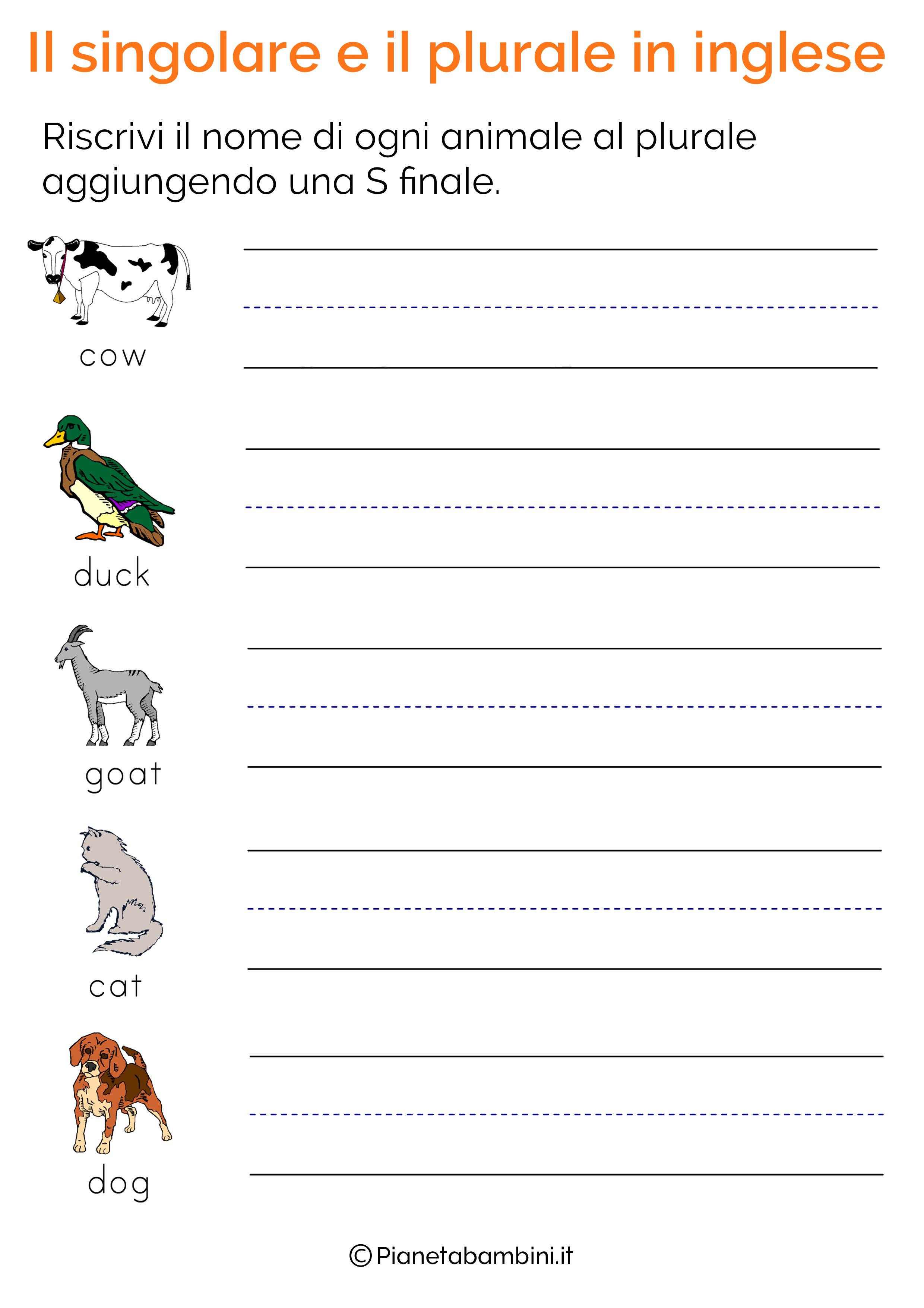 Esercizi sul singolare e plurale in inglese pagina 4
