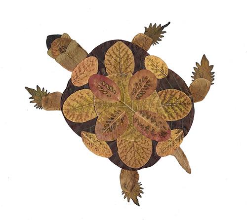 Tartaruga con foglie autunnali