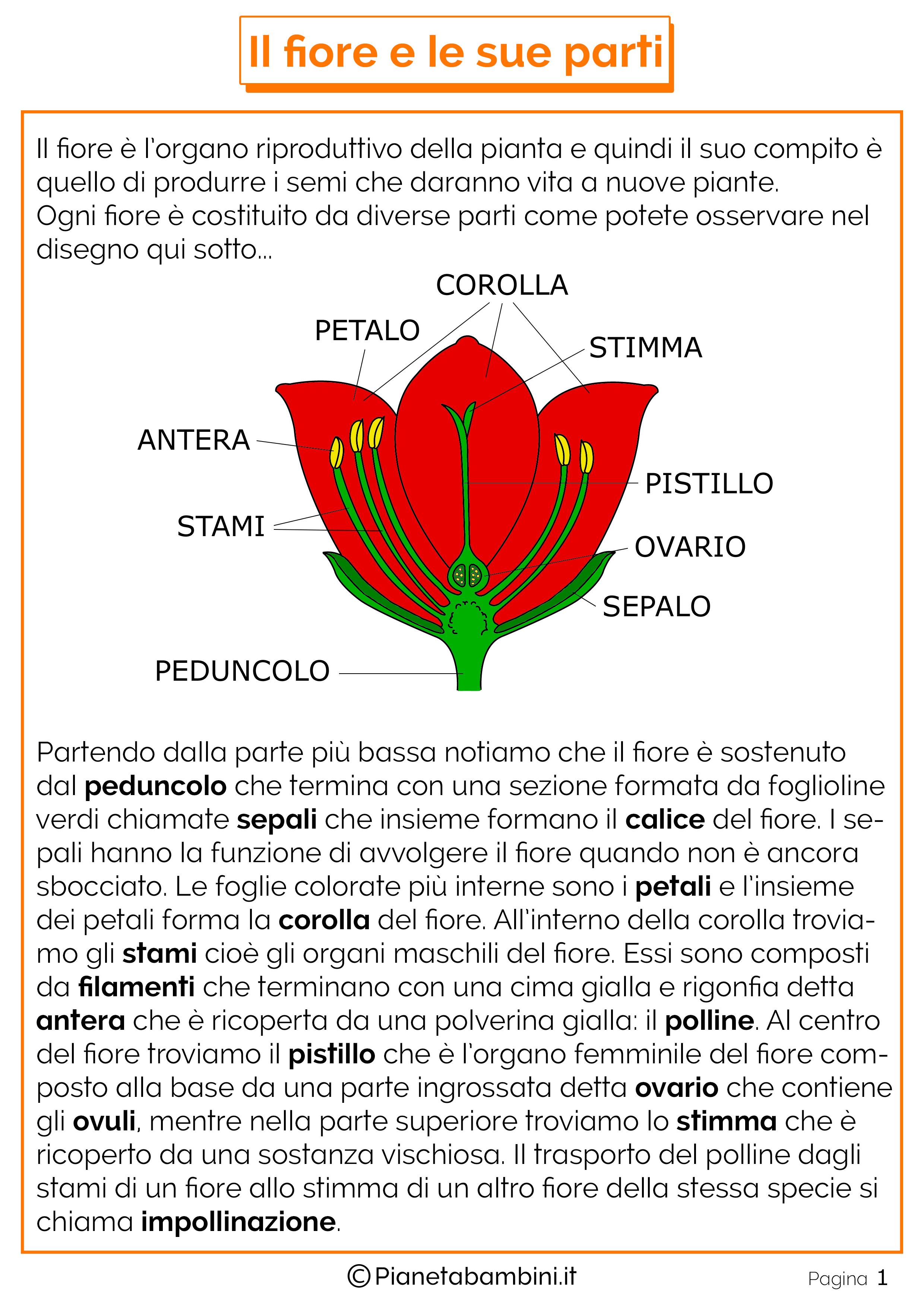 Le parti del fiore schede didattiche per la scuola