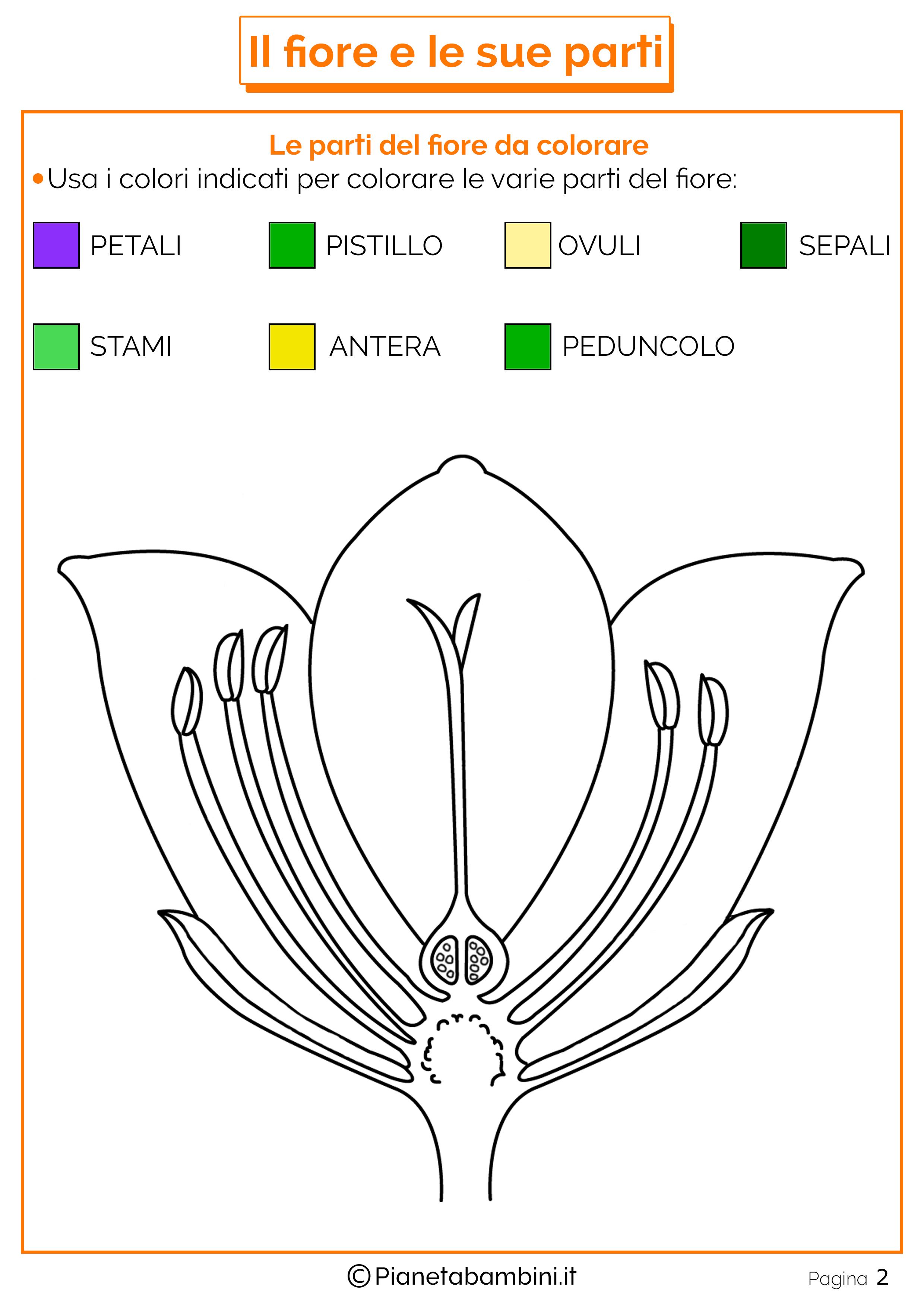 Le parti del fiore schede didattiche per la scuola - Immagine da colorare della terra ...