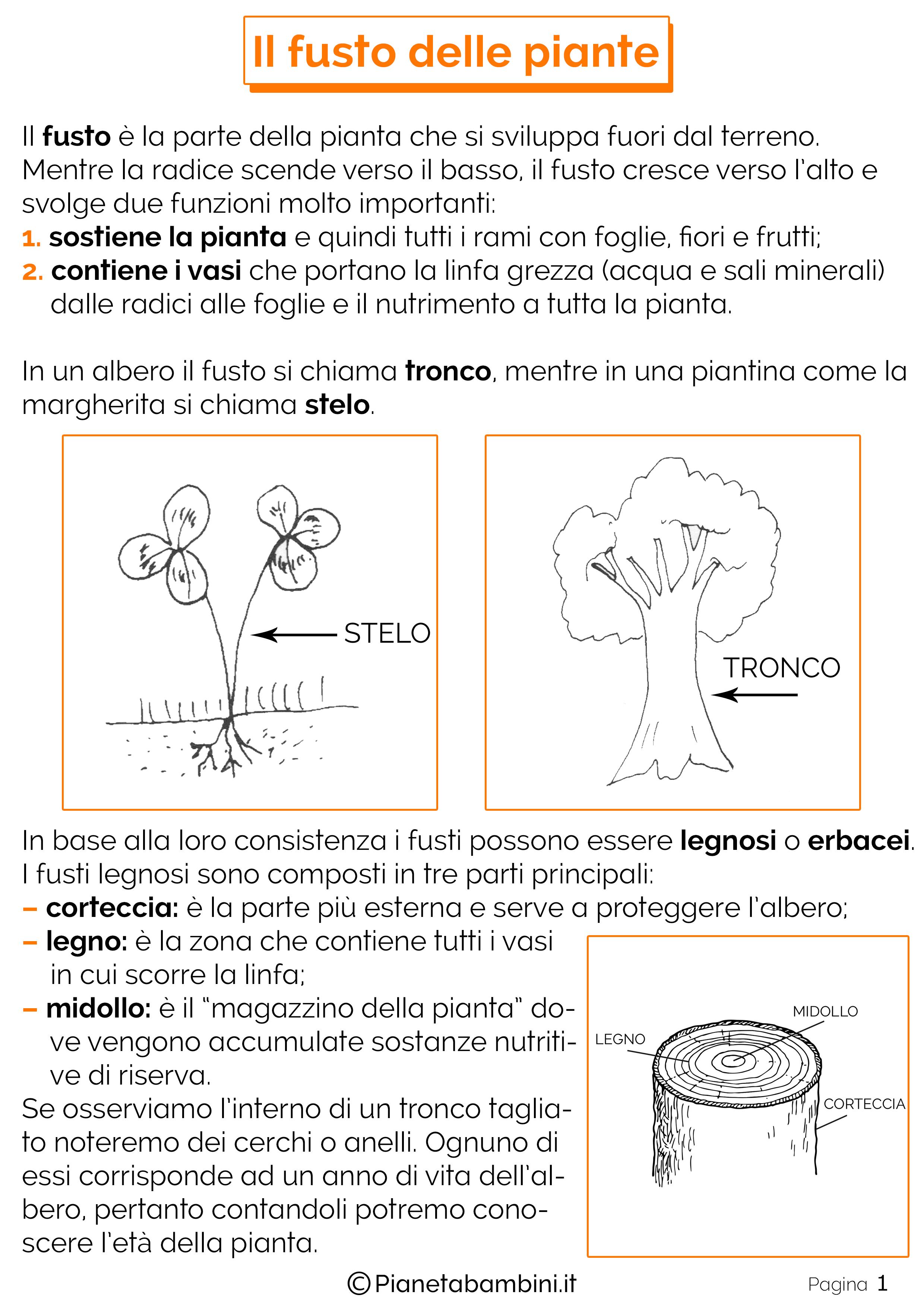 Schede-Didattiche-Fusto-Piante-1