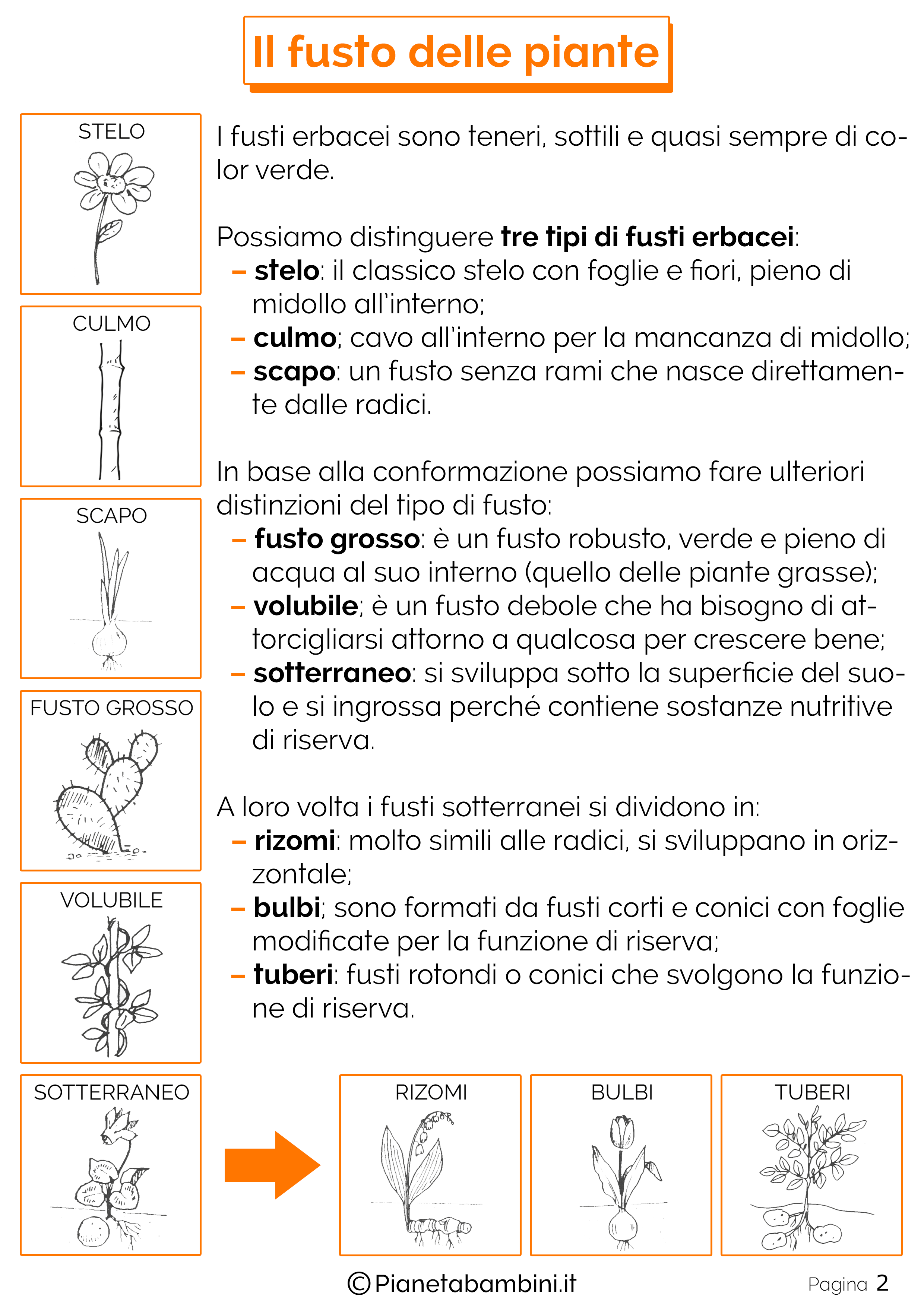 Schede-Didattiche-Fusto-Piante-2