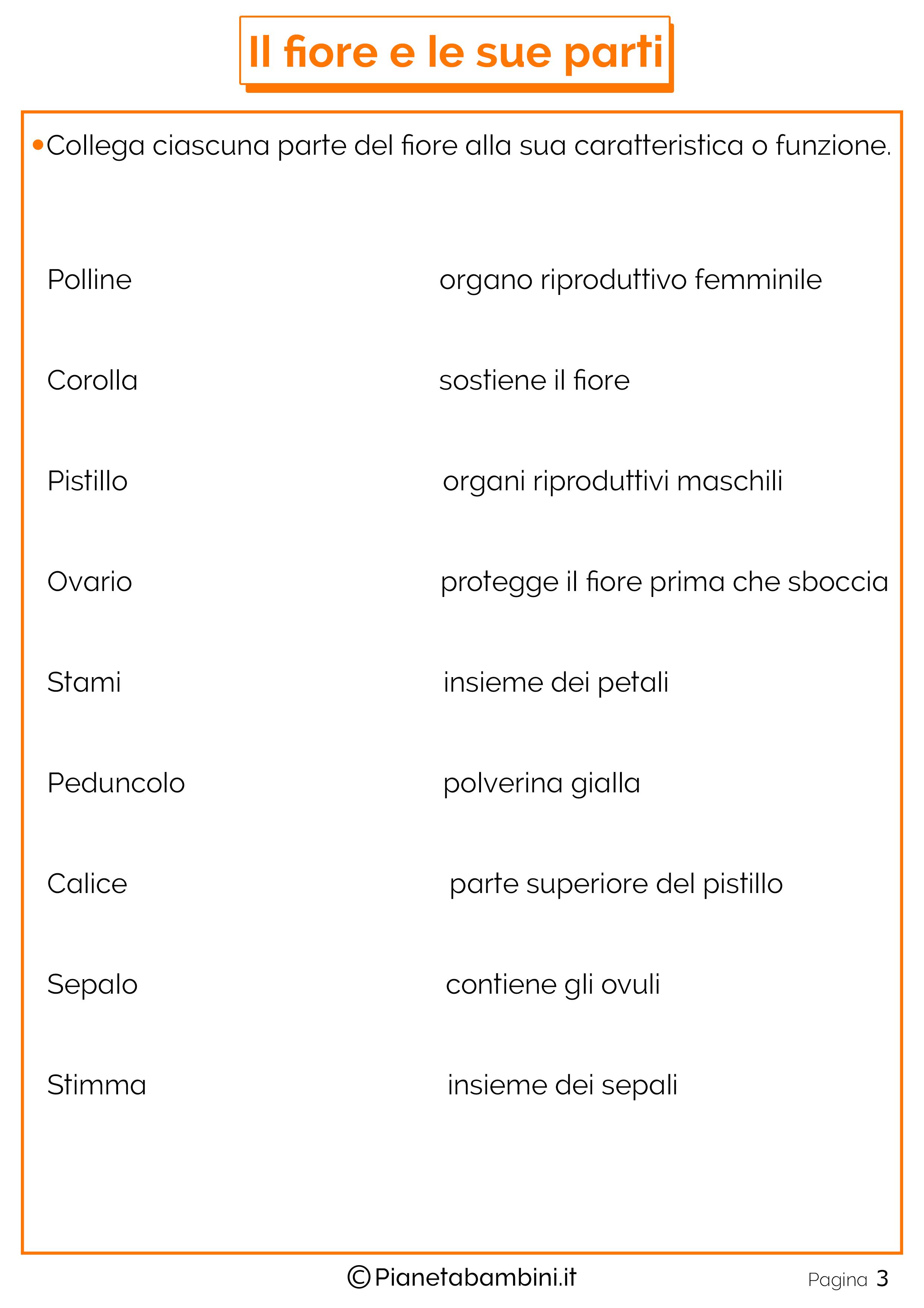 Schede-Didattiche-Parti-Fiore-1