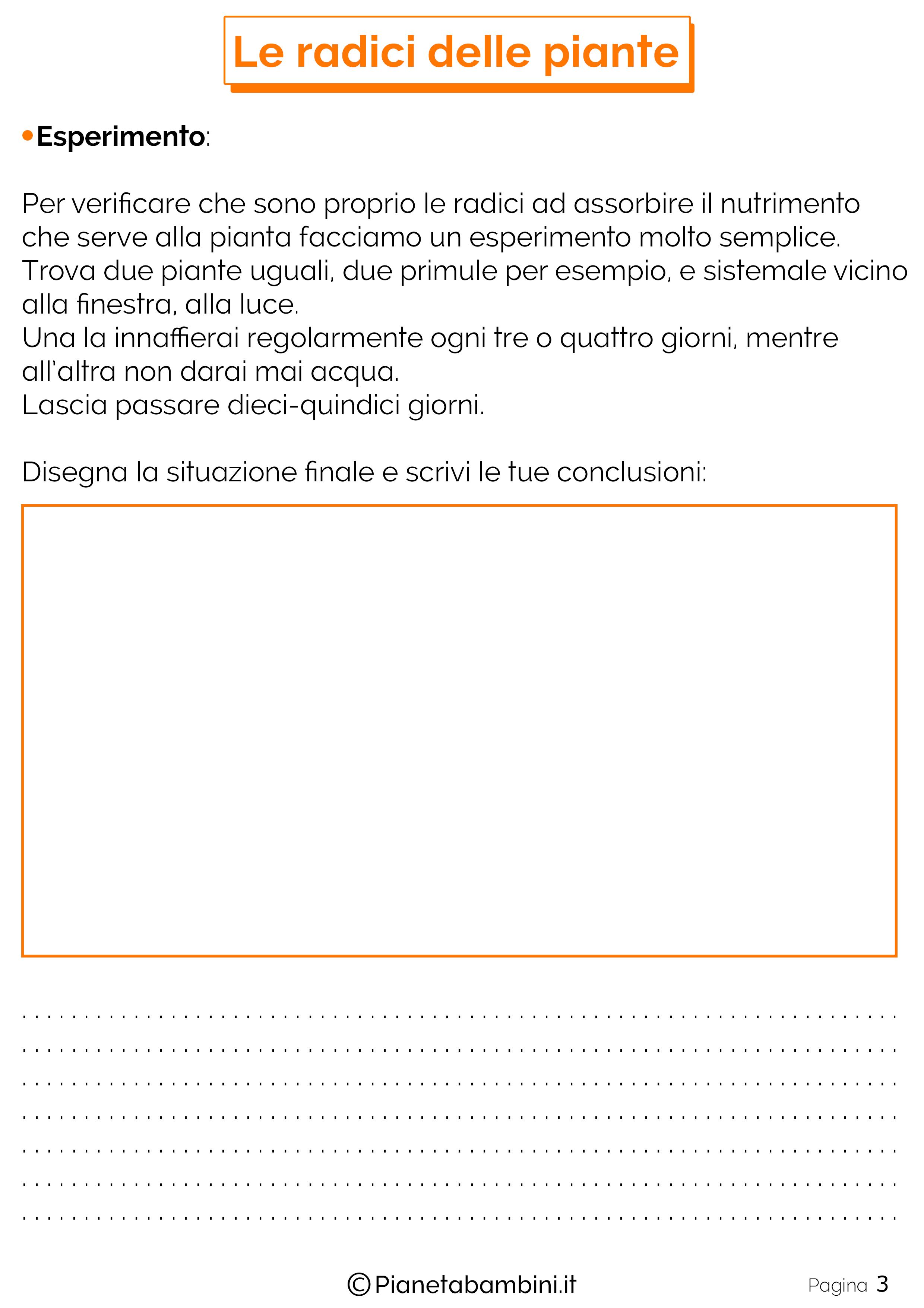 Schede-Didattiche-Radici-Piante-3