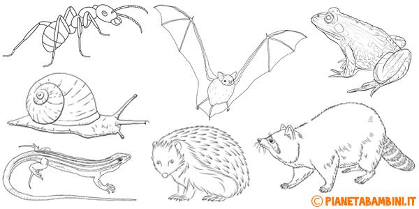 Disegni di animali che vanno in letargo da stampare gratis e colorare