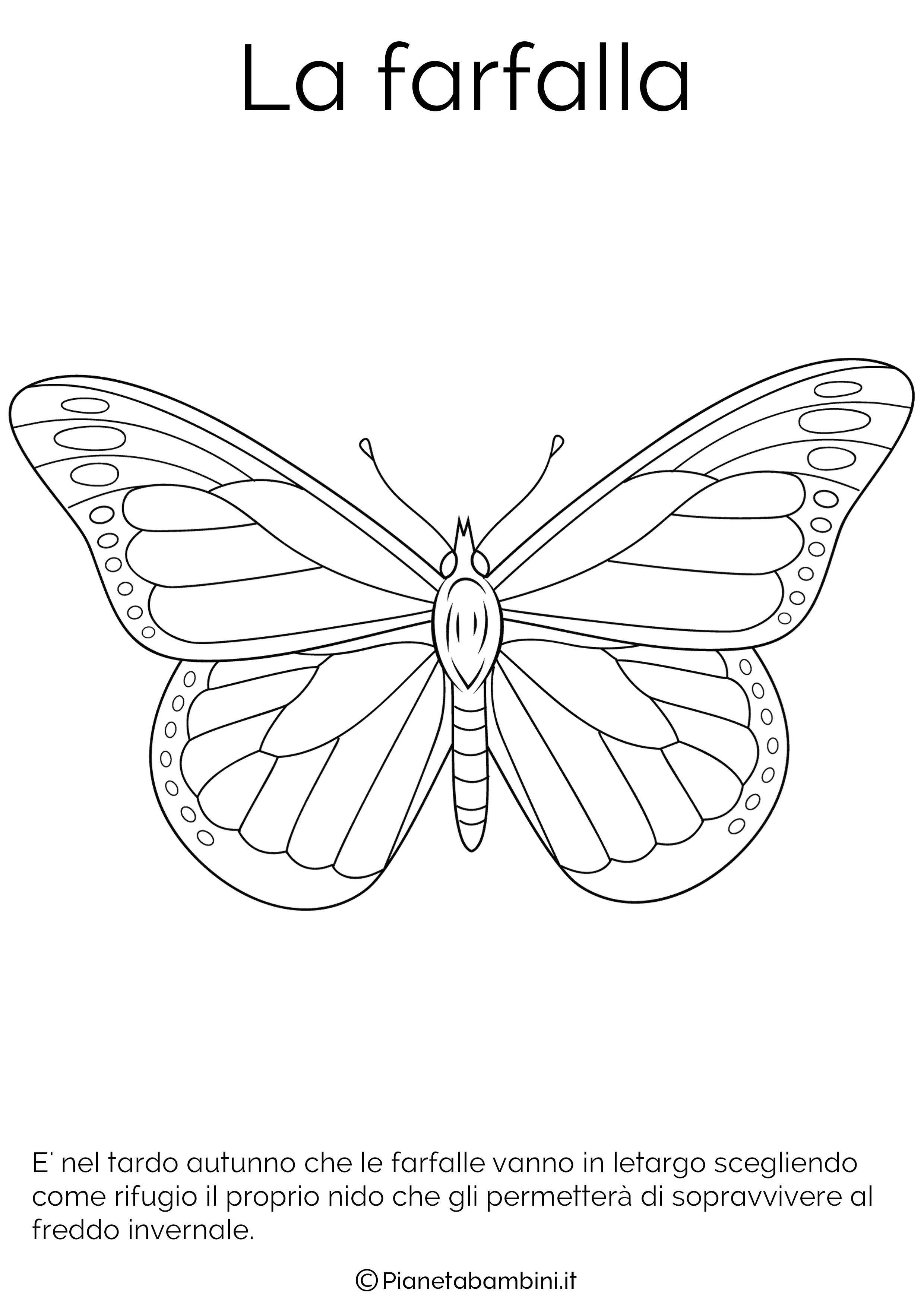 Disegno della farfalla in letargo da colorare