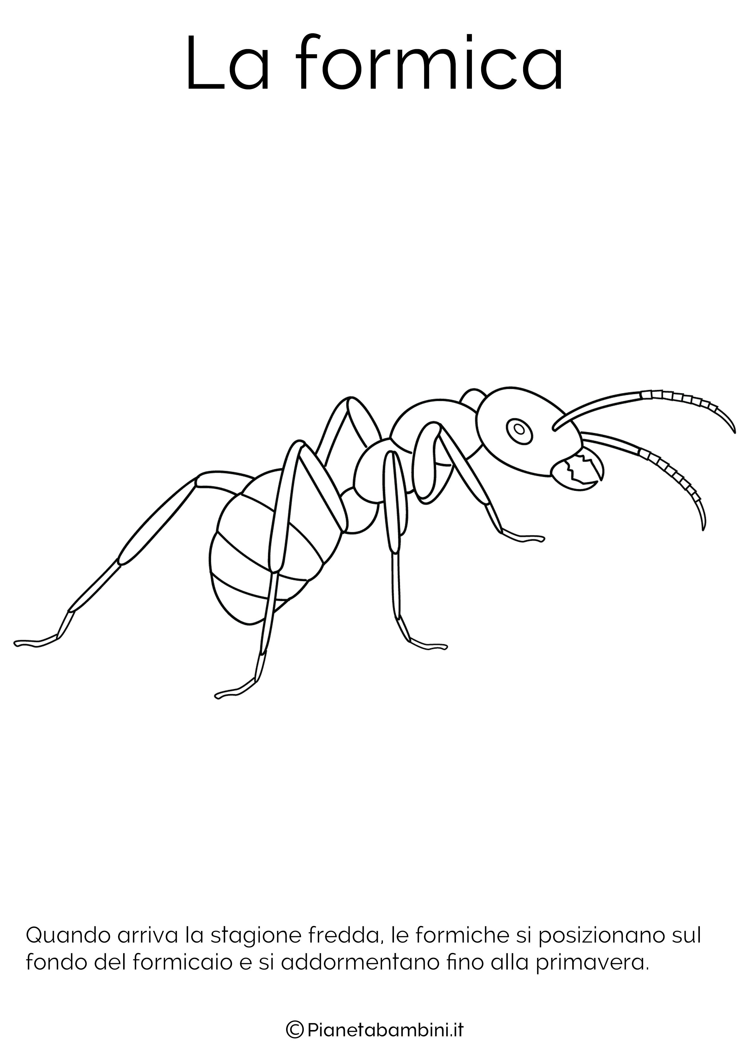Disegno della formica in letargo da colorare