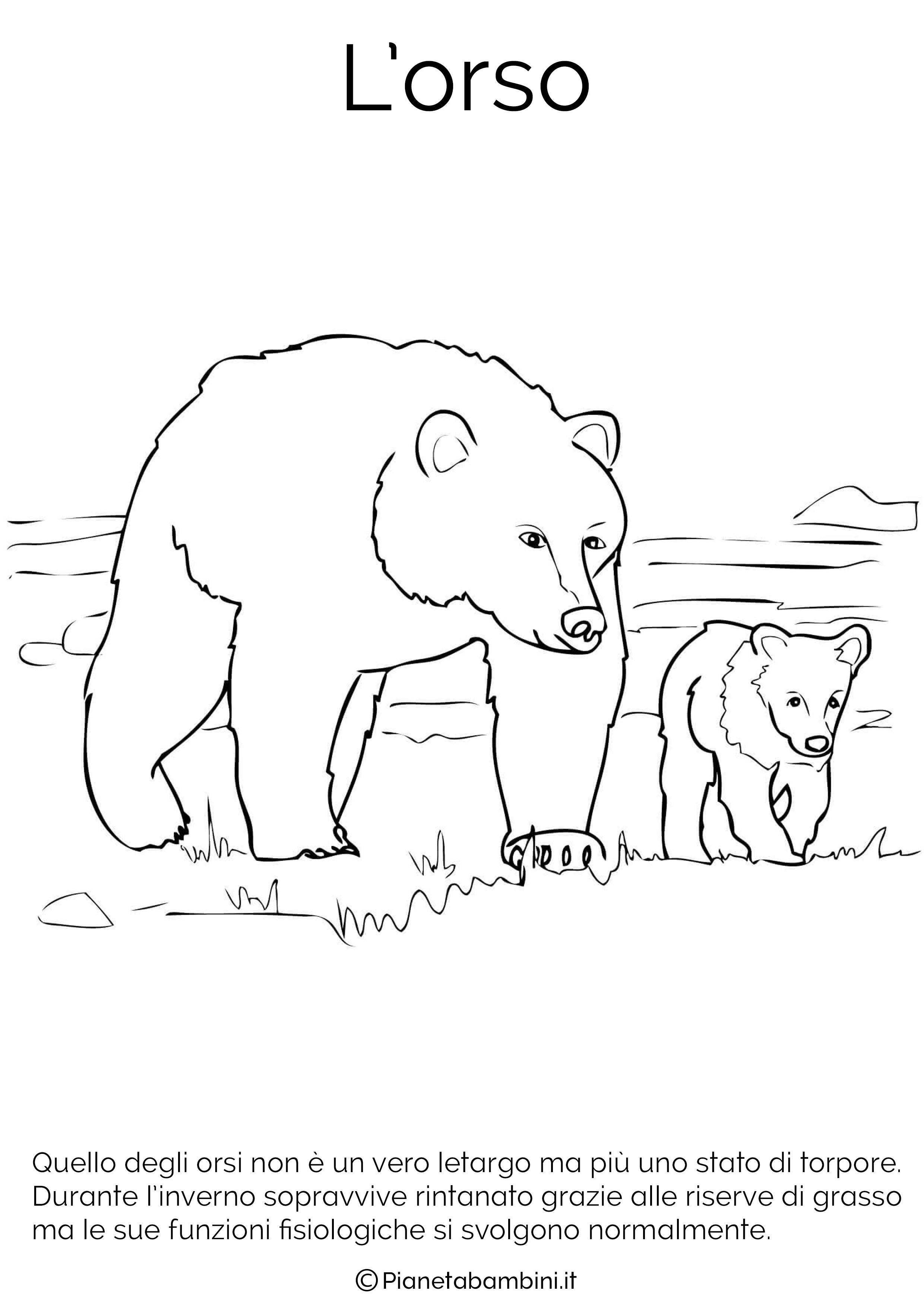 Disegno del'orso in letargo da colorare