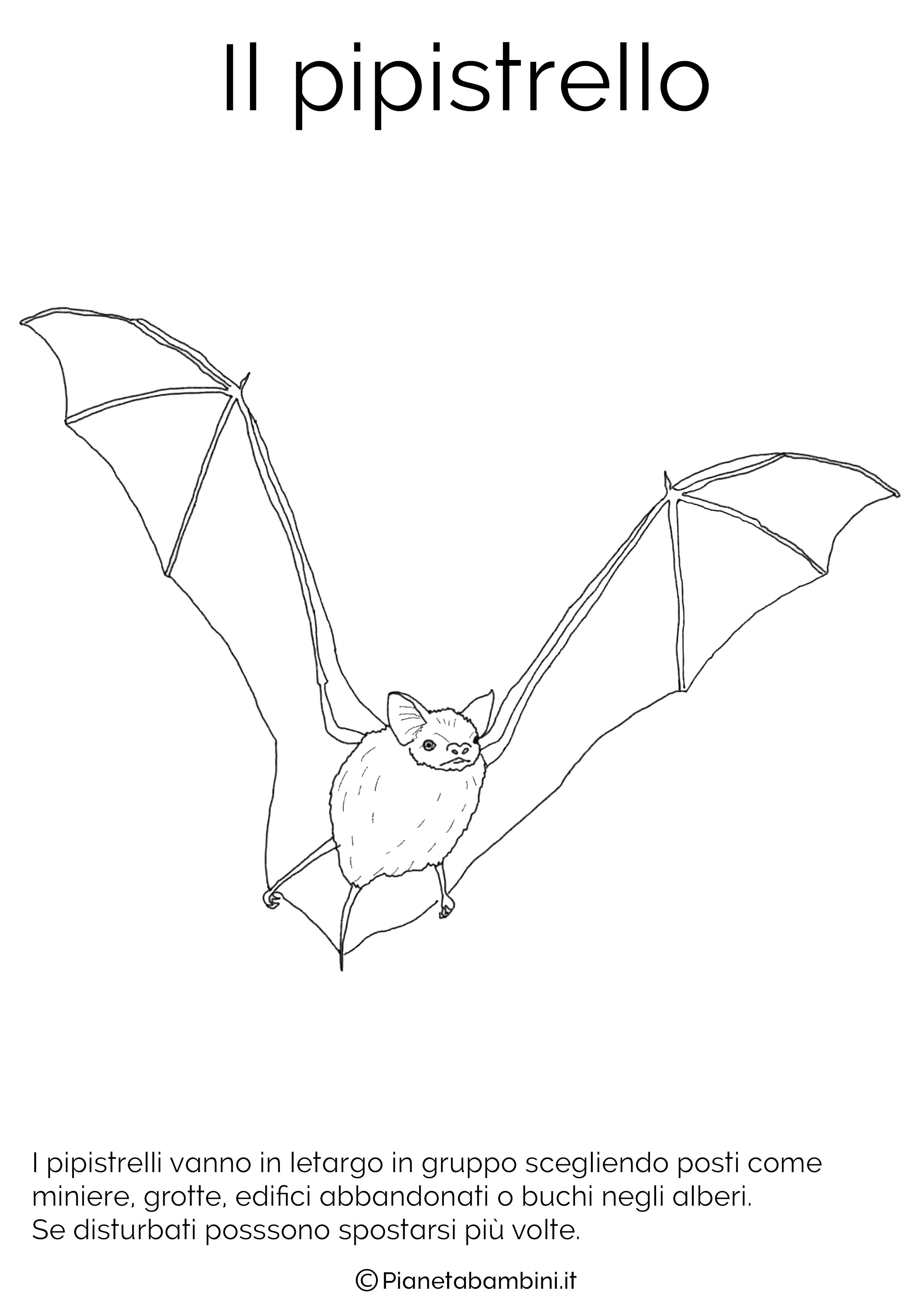 Disegno del pipistrello in letargo da colorare