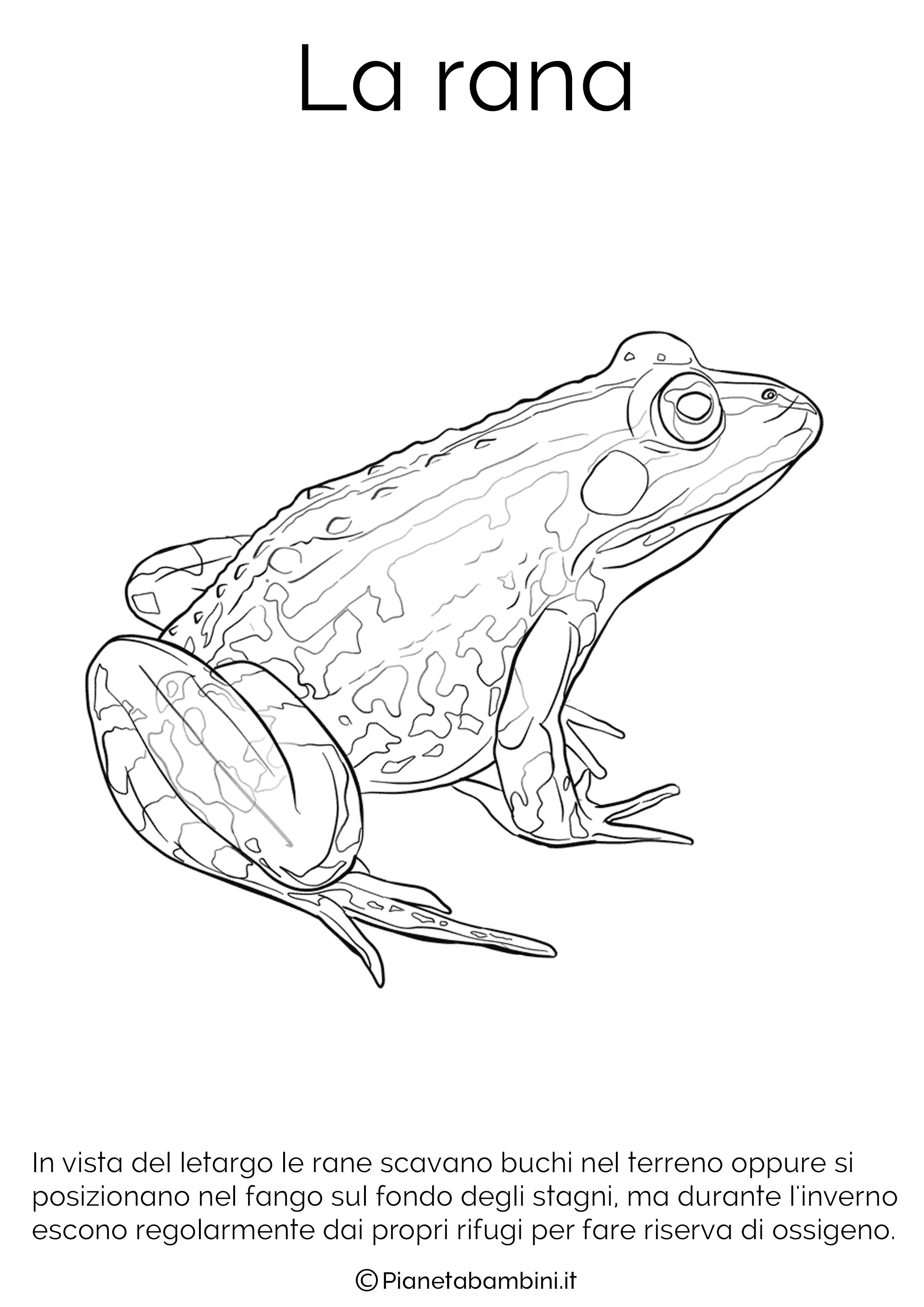 Disegno della rana in letargo da colorare